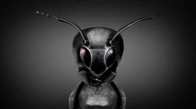 35_Ant_ET