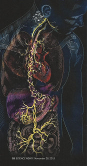 vagus-nerve-photo-538x1024