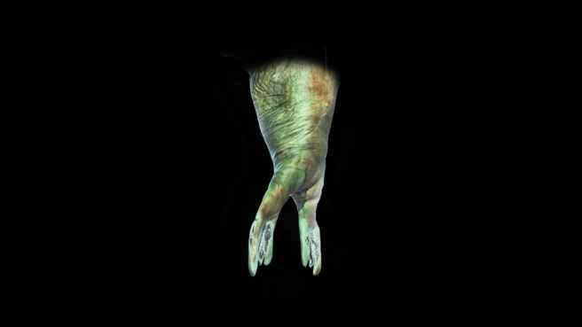 2_feet_of_an_aquatic_being_8010ae61d546e0a95fb50de3188a1a64_1600x0