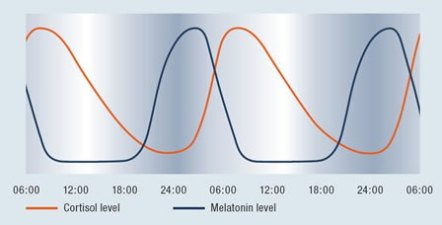 healthy-melatonin-and-cortisol-rhythm