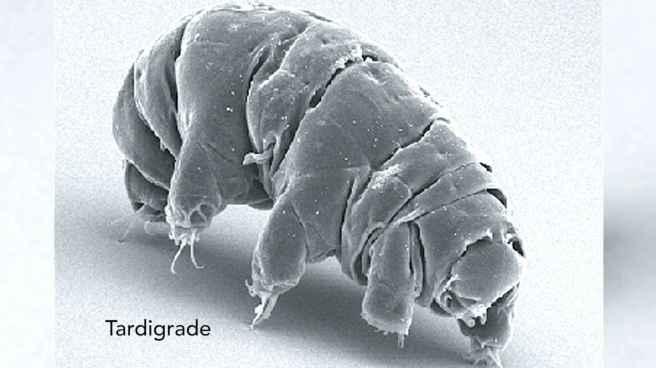 11_tardigrade_535bf5d544d728aedcd7c990ca11862a_1600x0