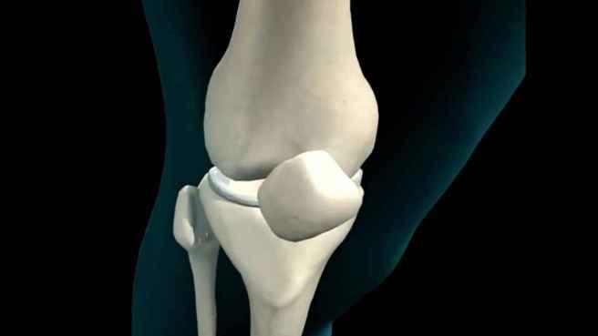 4_knee_and_leg_bones_98dc7ee322e8896ca2c471e035ef712d_1600x0