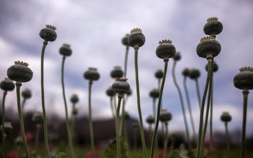 El enfoque de AMLO para poner fin a las guerras entre los carteles de la droga podría volverse contraél