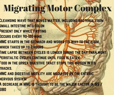 migrating-motor-complex