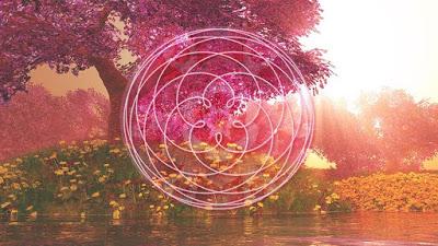 Rose of Venus